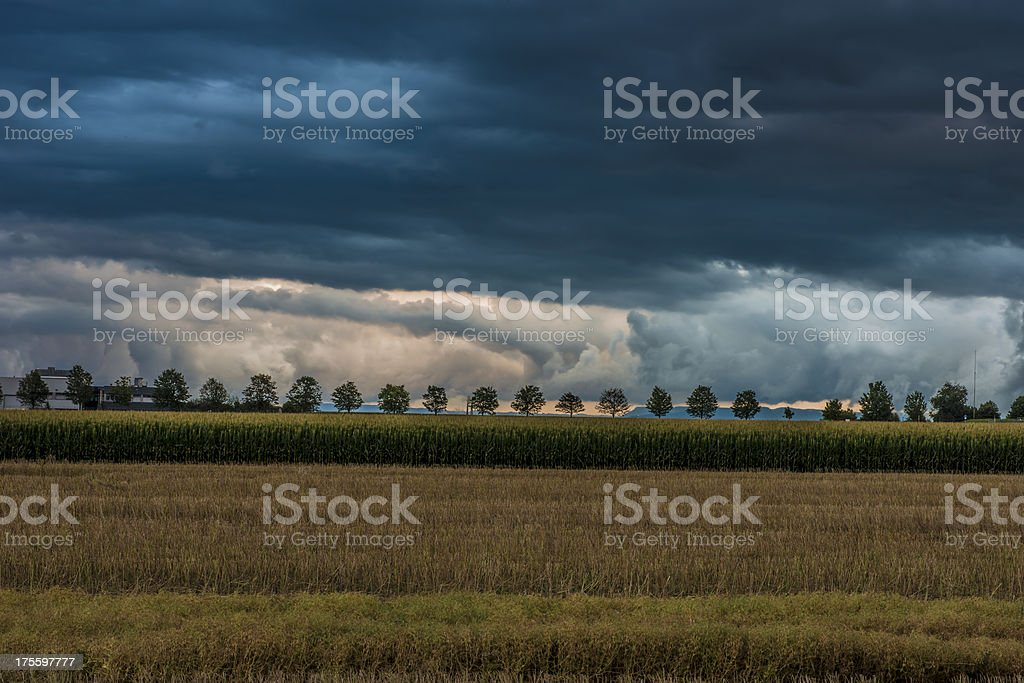 Autumn stormy dark cloudy sky field row trees sinister country royalty-free stock photo