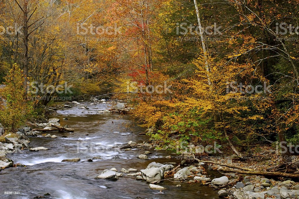 Autumn stream royaltyfri bildbanksbilder