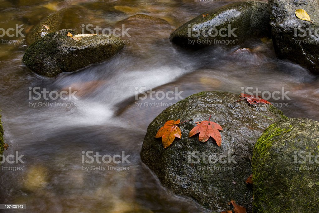 Autumn Stream XXL royalty-free stock photo