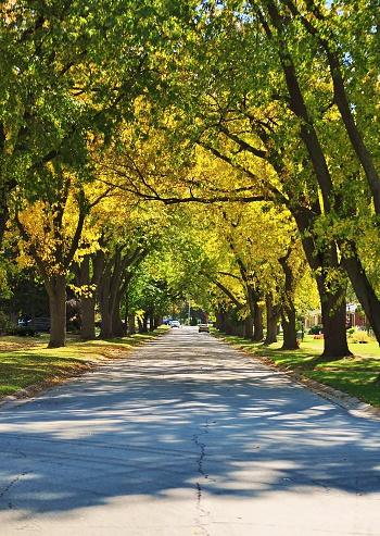 istock Autumn street. 591415038