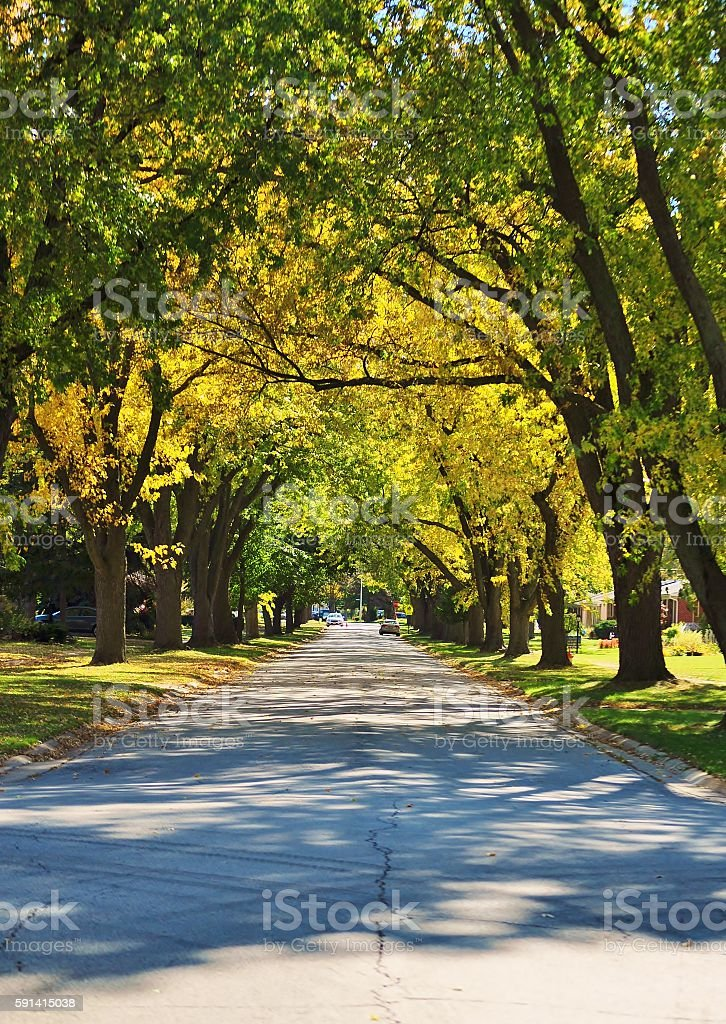 Autumn street. stock photo