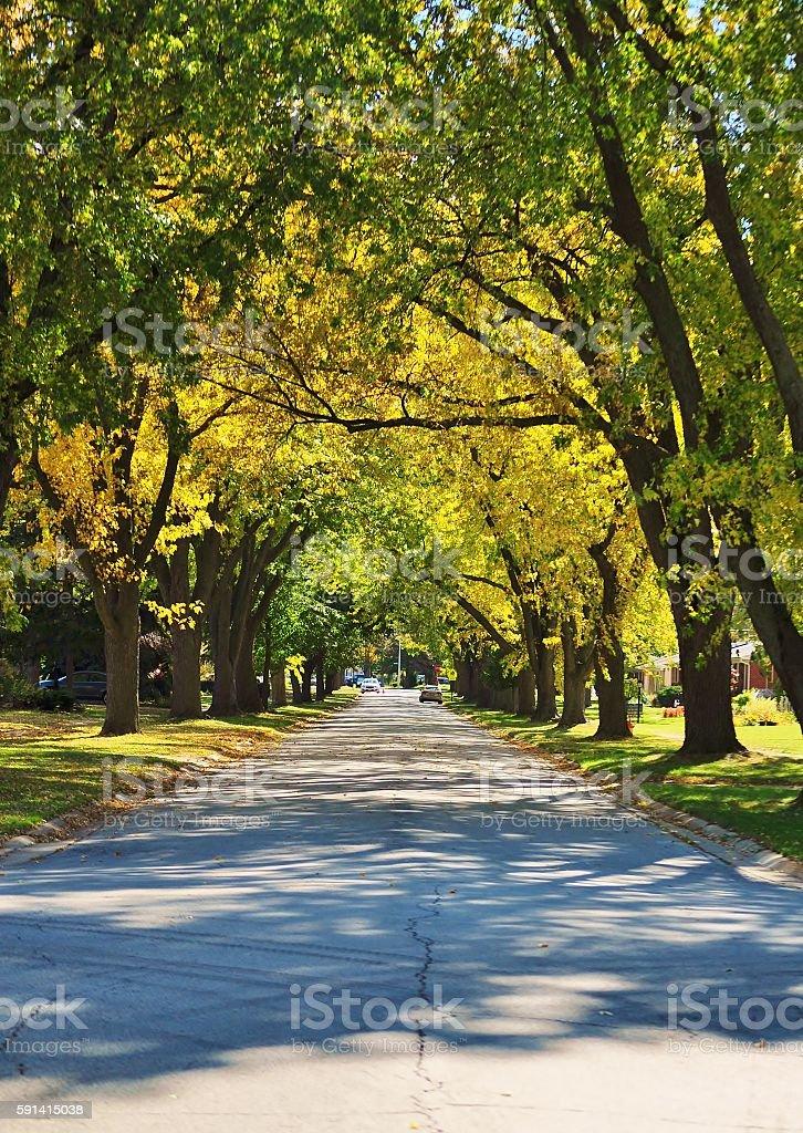 Autumn street. stock photo