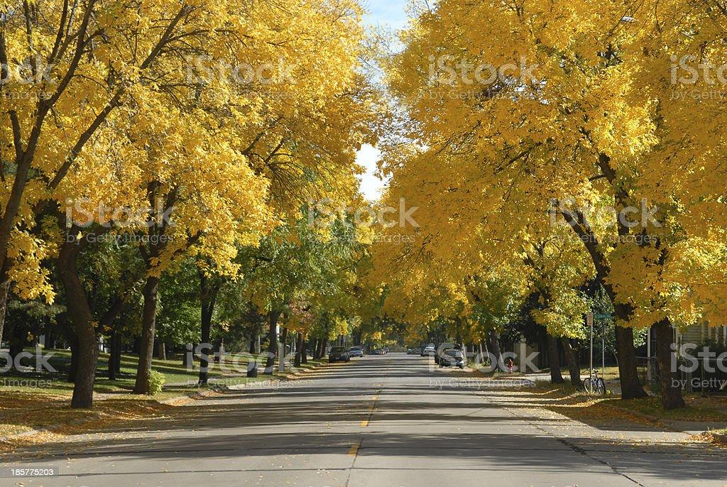 Autumn Street Scene stock photo
