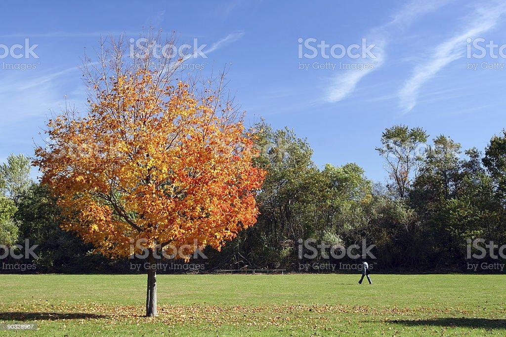 Autumn Stroll royalty-free stock photo
