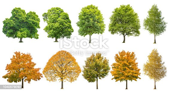 Autumn summer trees isolated on white background. Oak, maple, linden, birch. Green and yellow leaves