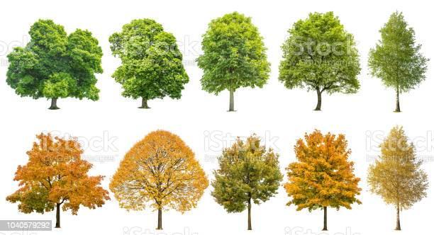 Photo of Autumn summer trees isolated white background