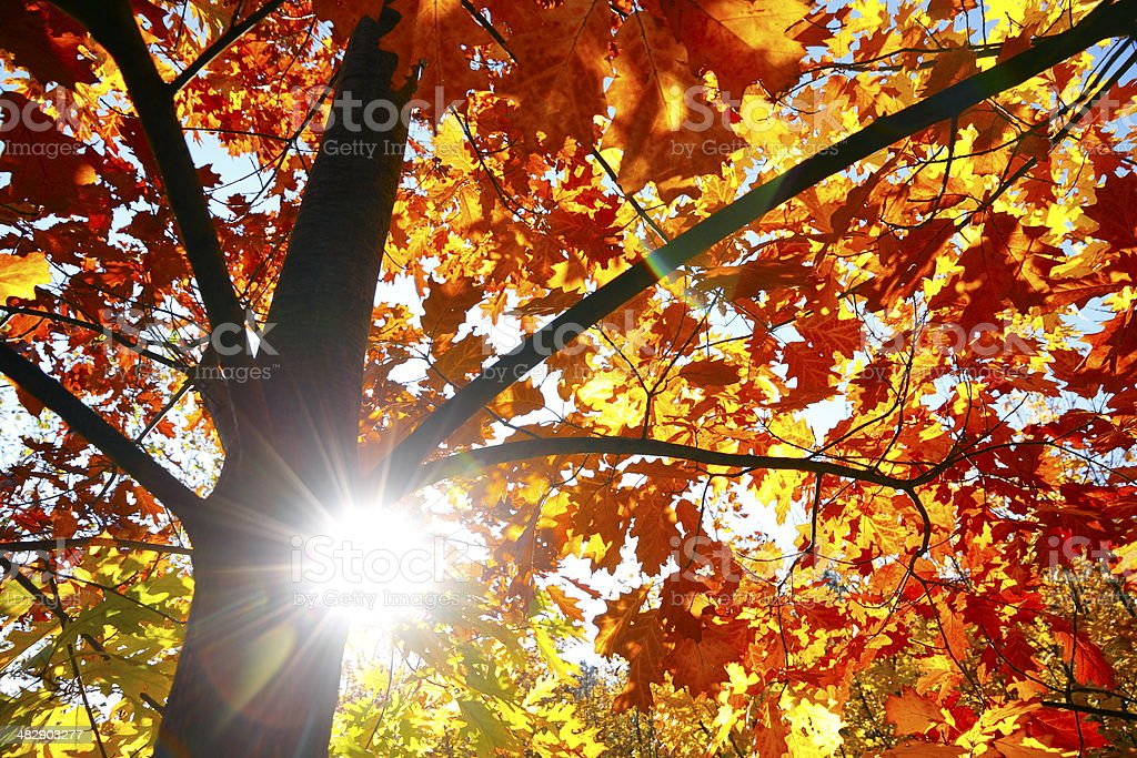 Autumn Sun Rays royalty-free stock photo