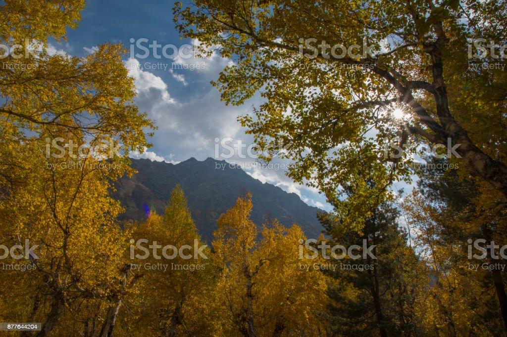 Sol de outono brilhar através de uma árvore majestosa - foto de acervo