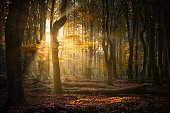 istock Autumn sun shining through forest 1286869686