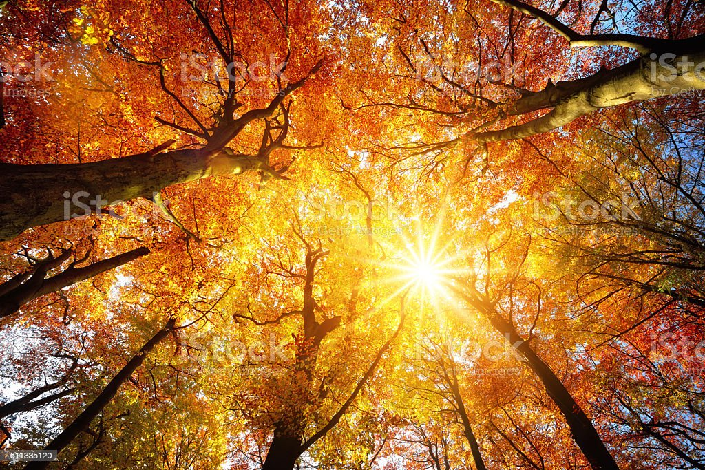 Autumn sun shining through tree canopy stock photo