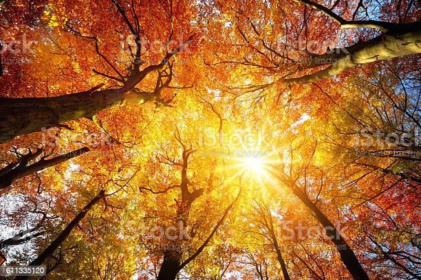 Photo of Autumn sun shining through tree canopy