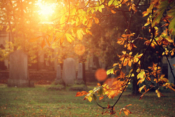 autumn sunlight in the cemetery - kerkhof stockfoto's en -beelden