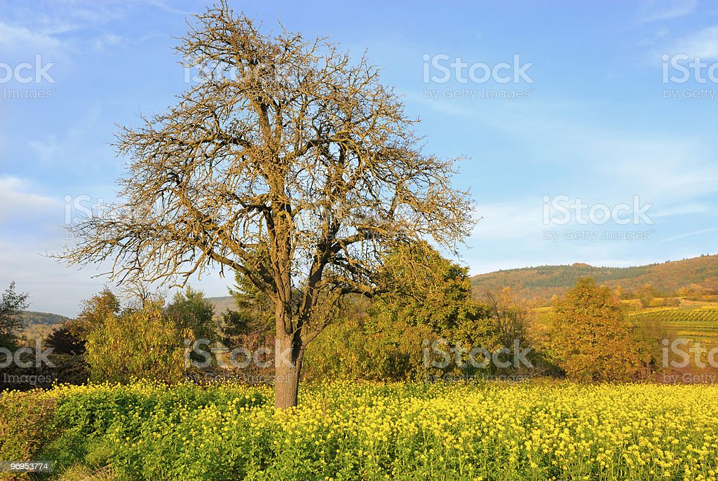 Autumn sunny day royalty-free stock photo