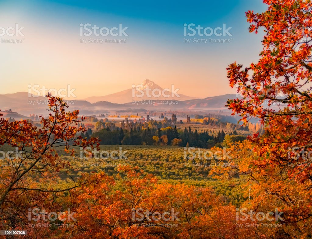 Autumn sunrise looking over the orchards and vineyards with Mt Hood in the distance looking south towards the mountain stock photo