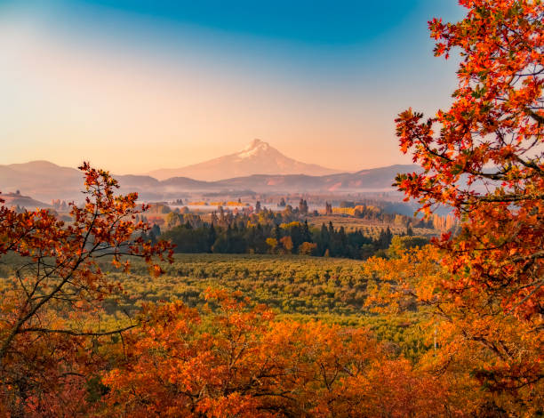 Autumn sunrise looking over the orchards and vineyards with Mt Hood in the distance looking south towards the mountain Autumn sunrise looking over the orchards and vineyards with Mt Hood in the distance looking south towards the mountain mt hood stock pictures, royalty-free photos & images