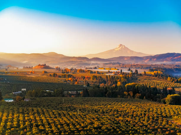 Autumn sunrise of Mt Hood with mist rising in the surrounding vineyards and fruit orchards stock photo
