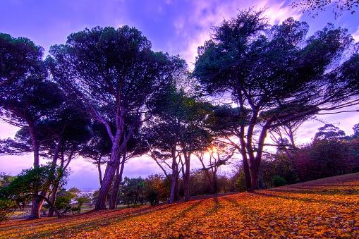 Autumn Sunset Forest - Atardecer de Otoño en Bosque
