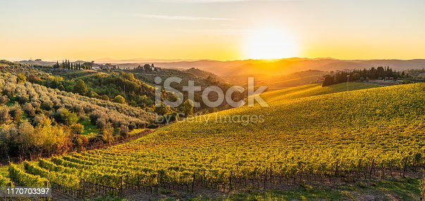 Vines in the foreground on a Tuscan landscape at sunset in early autumn.