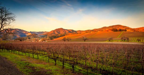 Autumn Sunset in the Vineyard stock photo