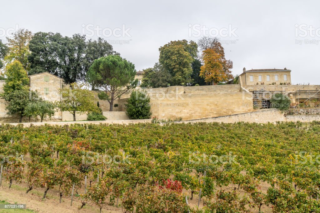 Autumn sunset on vineyards around Saint-Emilion with hills grapes and trees stock photo