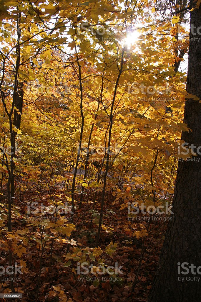 Autumn Sunshine royalty-free stock photo