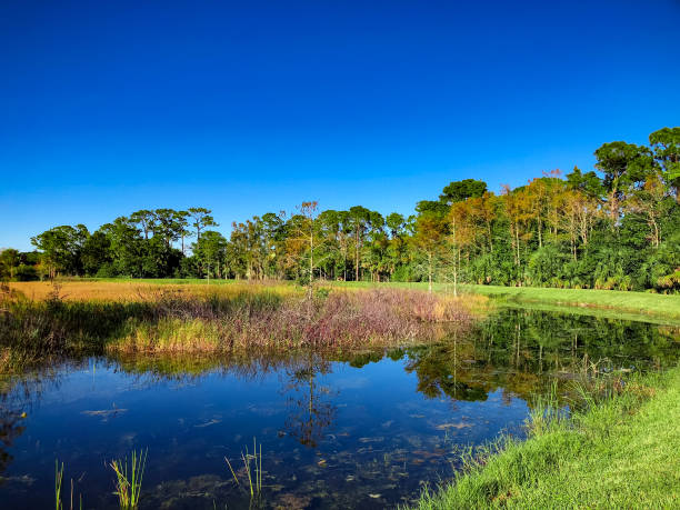 autumn swamp landscape autumn in the swamp south georgia island stock pictures, royalty-free photos & images