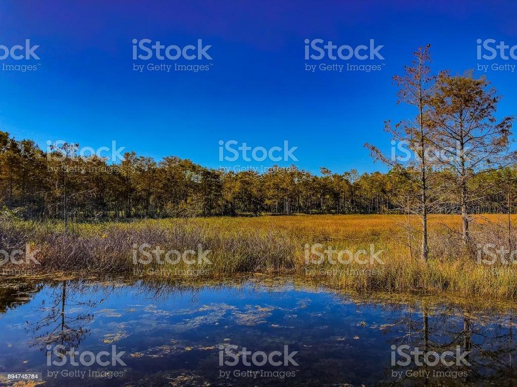 autumn swamp landscape stock photo