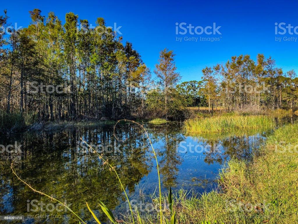 Autumn swamp plants stock photo