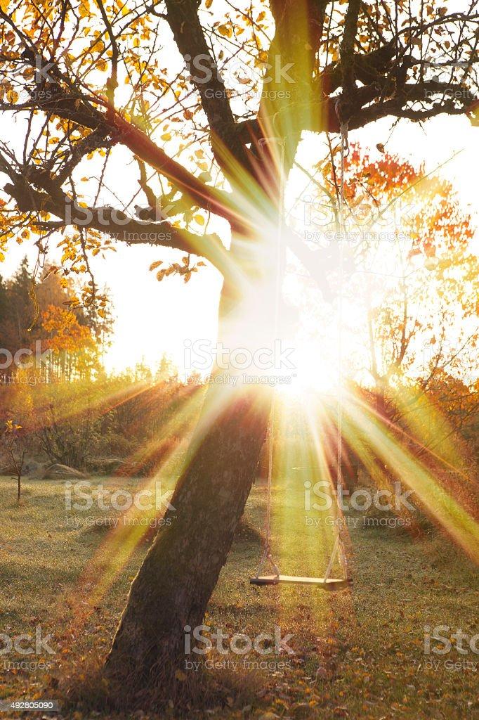Autumn Swing stock photo