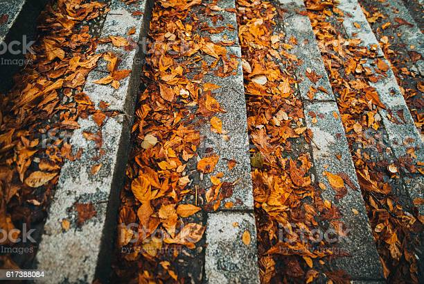 Photo of Autumn texture on staircase