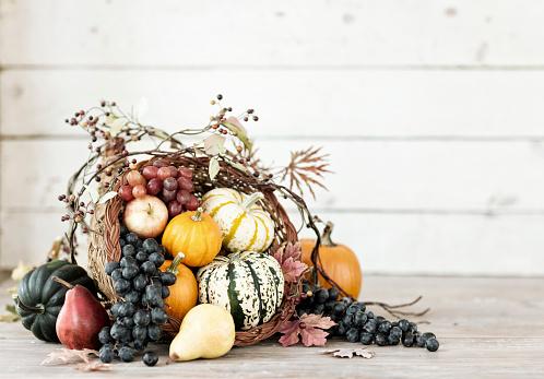Autumn Thanksgiving cornucopia on a rustic white wood background. Very shallow depth