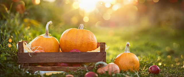 Happy Thanksgiving Day Background. Holiday Autumn Concept Harvest