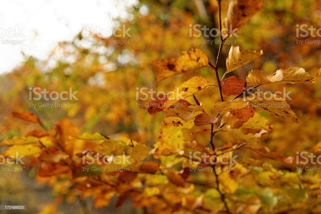 Autumn theme royalty-free stock photo