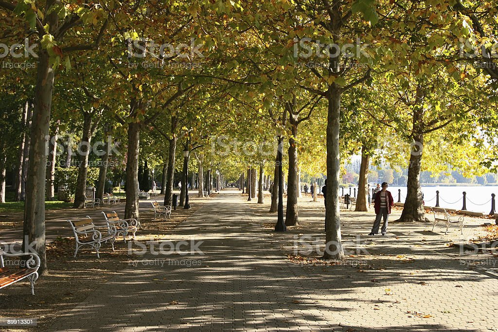 Autumn theme royalty-free stock photo