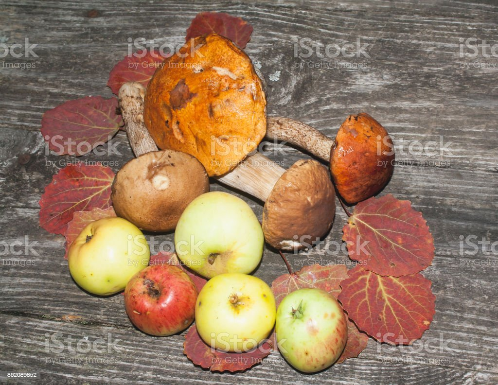 autumn theme still life stock photo