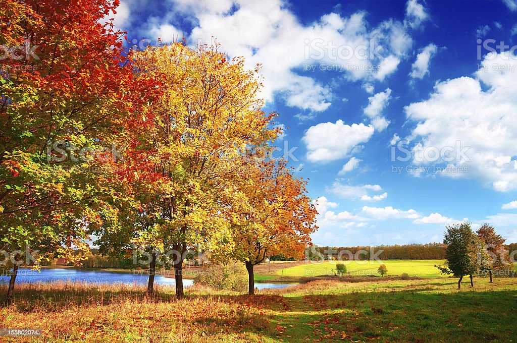 Autumn themed background on a mildly cloudy day stock photo