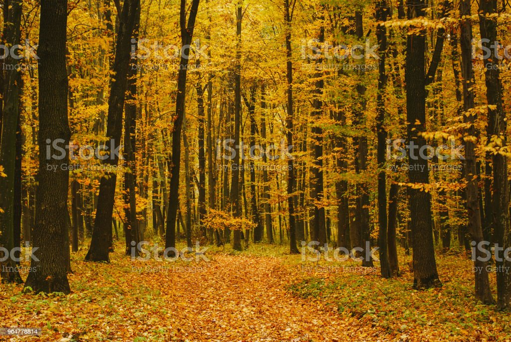 Autumn time of the year. royalty-free stock photo