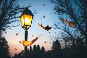Last autumn leaves falling from the trees at night. Illuminated street lamp in the park.