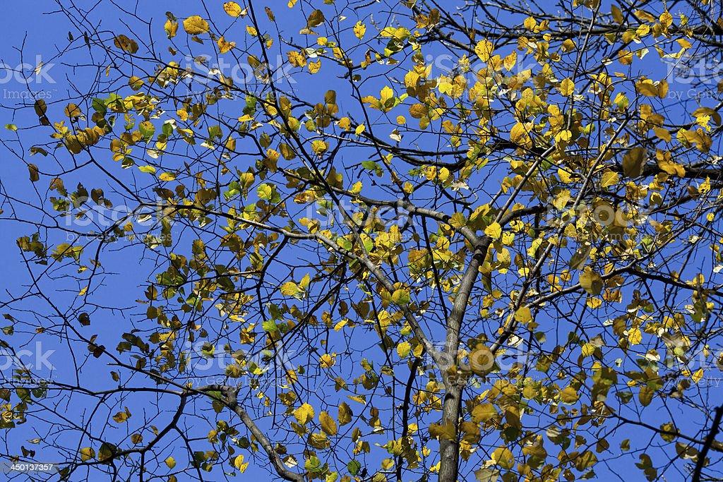 Autumn time royalty-free stock photo