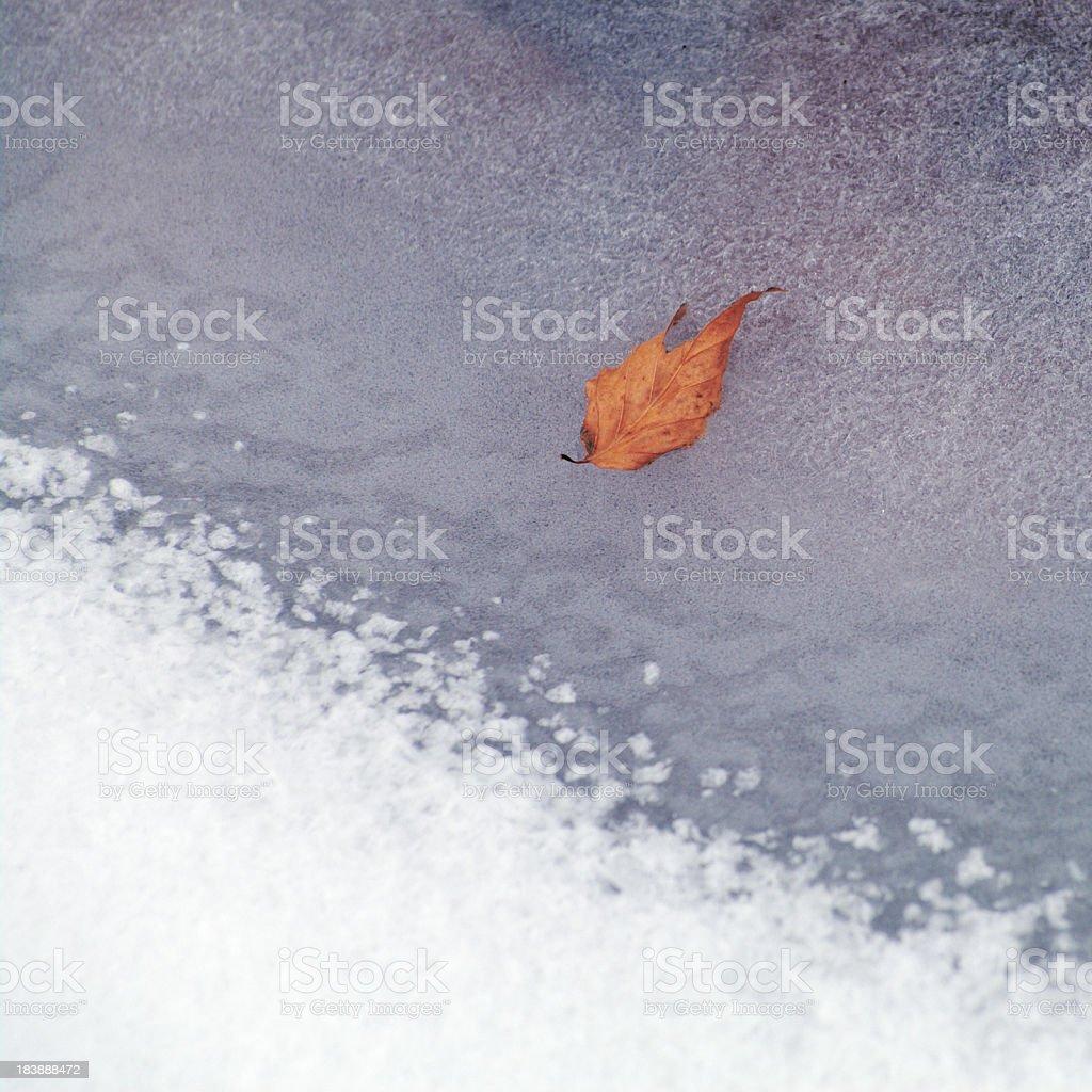 Autumn to Winter stock photo