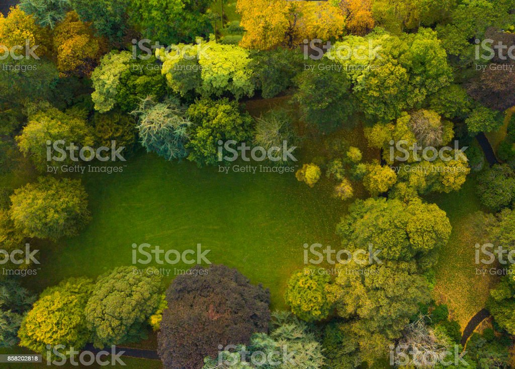 Autumn tones from above a forest royalty-free stock photo