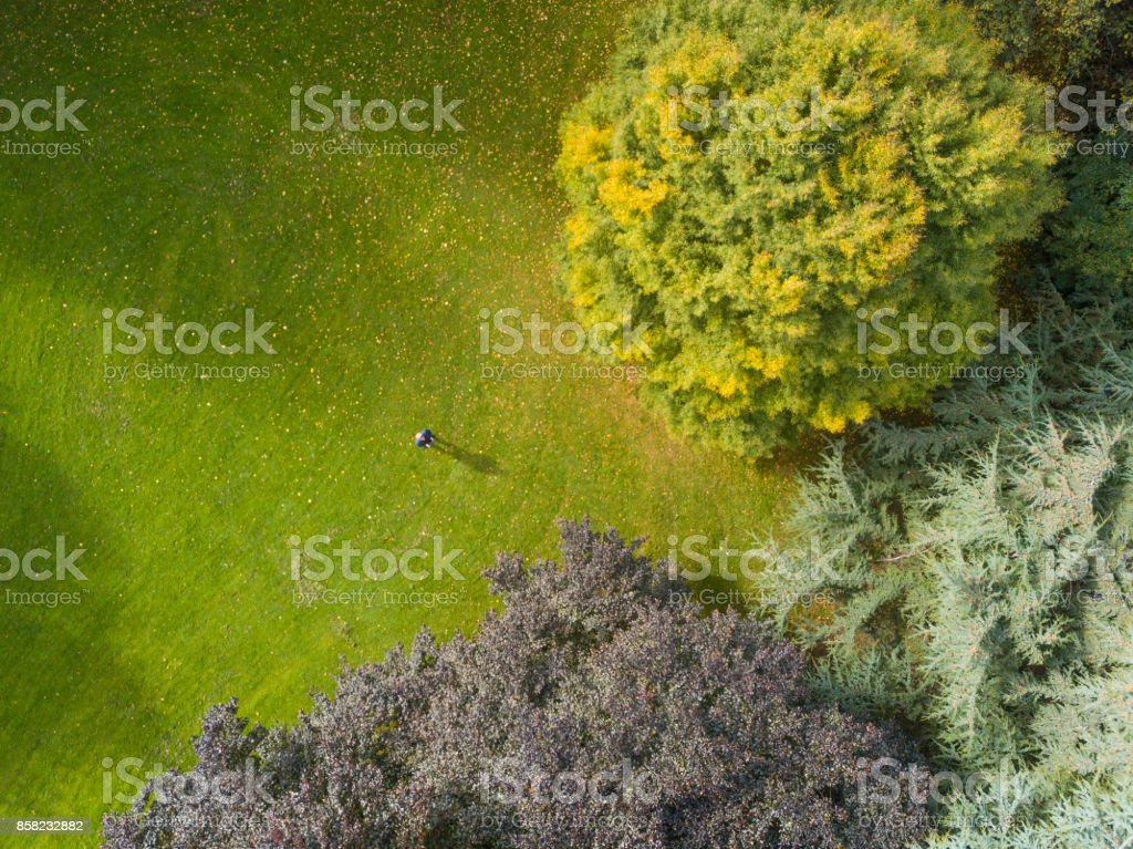 Autumn tones from above a forest stock photo