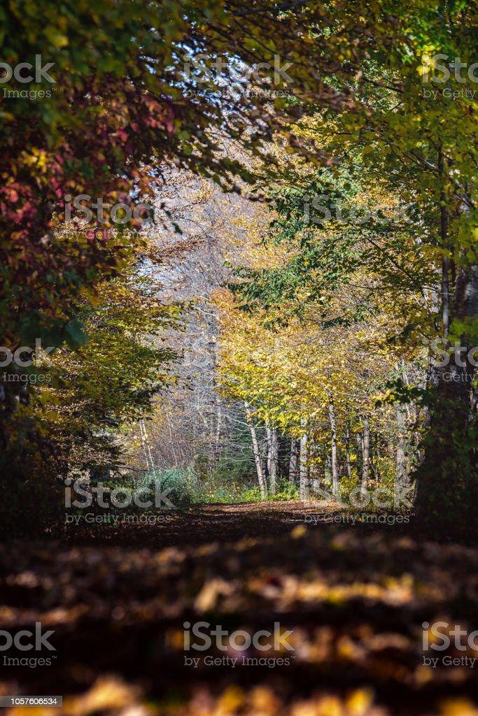 Sentier automne, arbres colorés - Photo