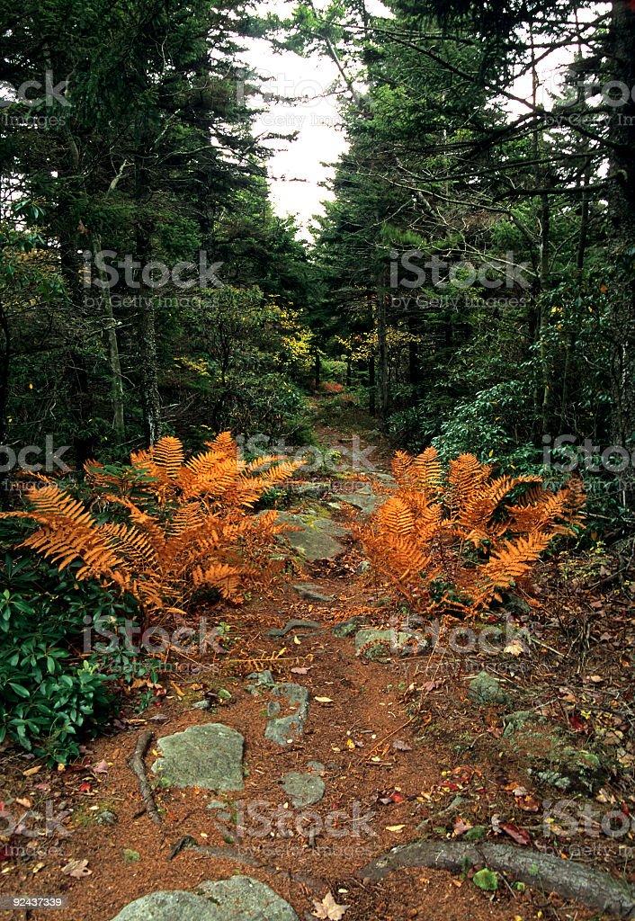 Autumn, Trail, Dolly Sods, Monongahela NF, WV royalty-free stock photo