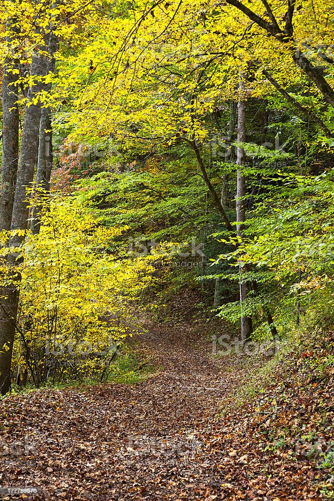 Autumn Trail in the Woods stock photo