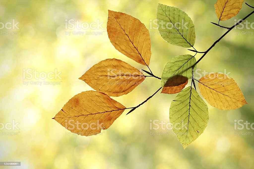 Autumn Transformation stock photo