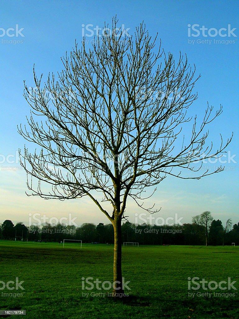 Autumn Tree 3 royalty-free stock photo
