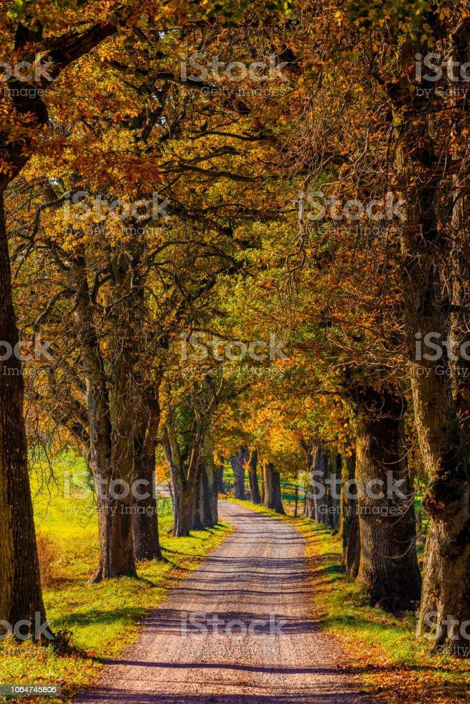 Hösten träd gränd bildbanksfoto