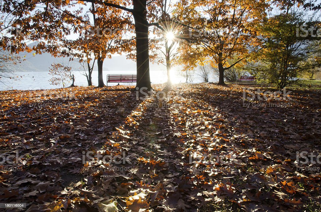 Autumn tree and bench stock photo