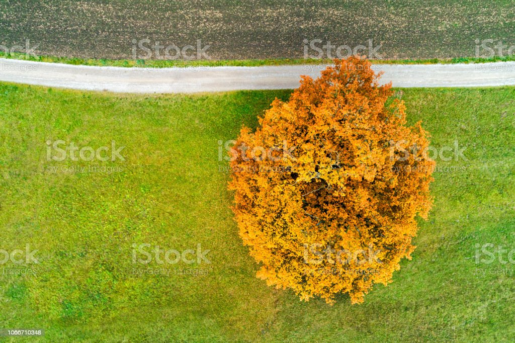 Aerial view of a single tree on a green field and country road in...